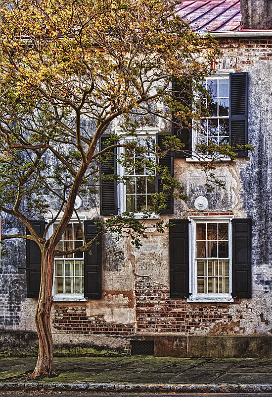 Windows of Charleston