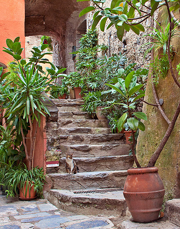 Alley Cat - Vernazza