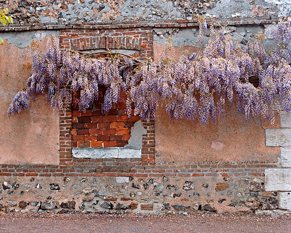 Monet's Wisteria Wall - France