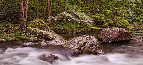 Smoky Mountains Spring Photographic Workshop Tour