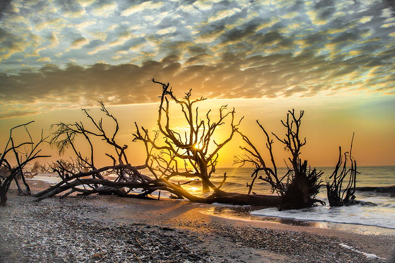 Botany Bay Boneyard Photographic Workshop Tour